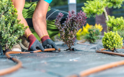 Landscaping Do's and Don'ts For Home Sellers In Phoenix