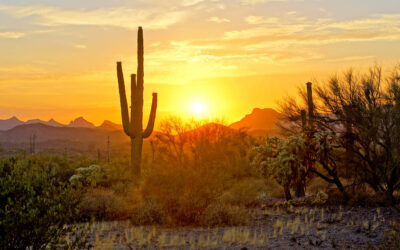 Tips To Prepare Your Home In AZ To Sell For The Summer
